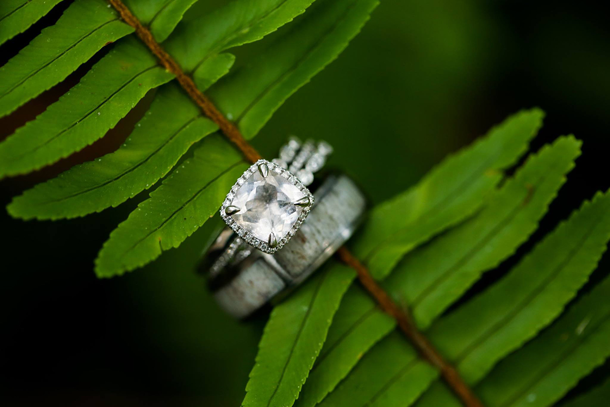 Beautiful rings on a fern - Elope to Savannah